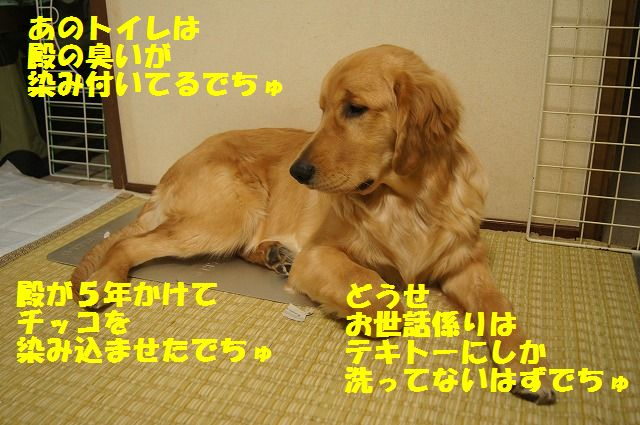 004_20120512233441.jpg