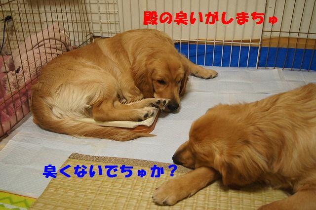 006_20120512233439.jpg