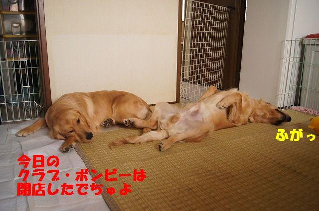 03_20120511101914.jpg
