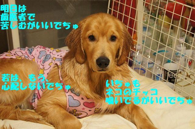 10_20120504013038.jpg