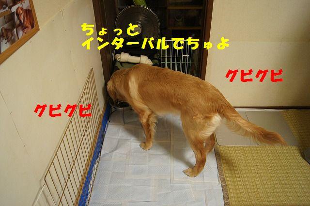 10_20120507014218.jpg