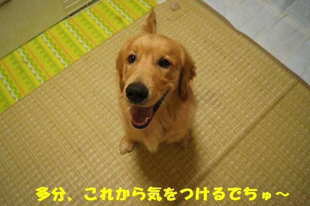 10_20120509214135.jpg