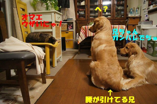 10_20120520202357.jpg
