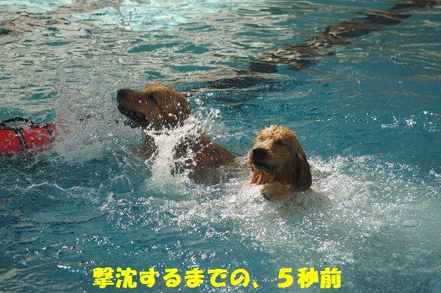 10_20121029105609.jpg