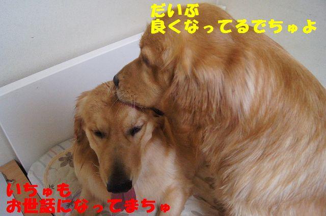 10_20121225115639.jpg