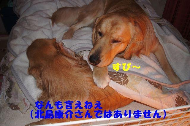 10_20130111210318.jpg