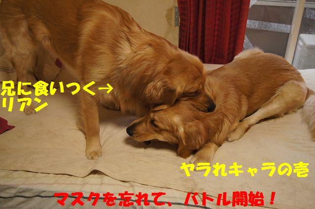 10_20130119070458.jpg
