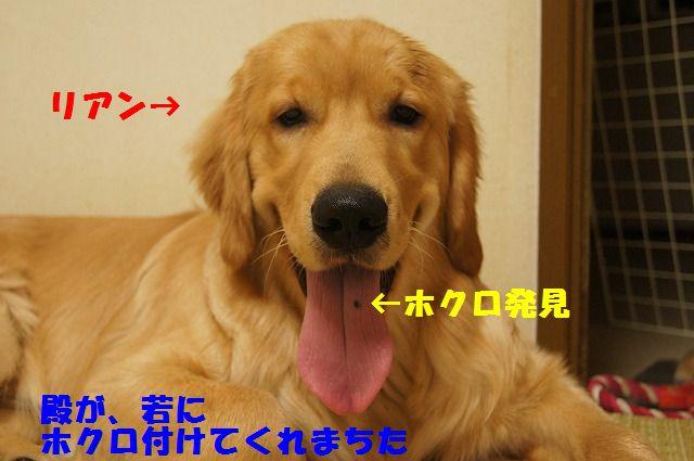 11_20120430000416.jpg