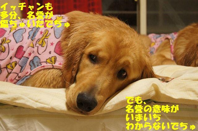 11_20120504013037.jpg