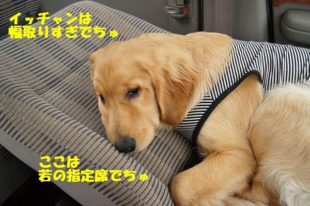 11_20120511101946.jpg