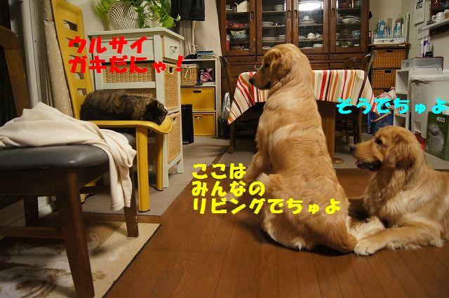 11_20120520202356.jpg