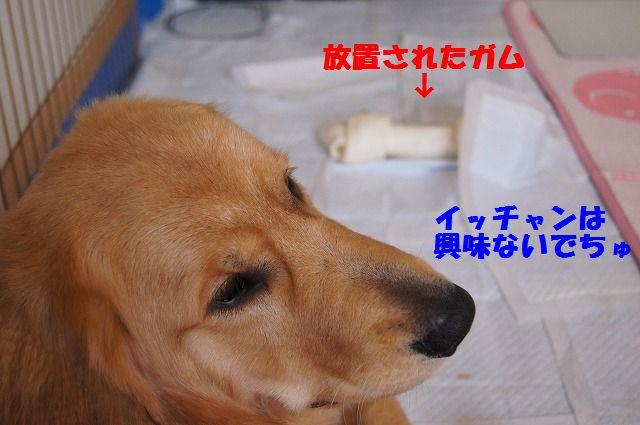 11_20120528213720.jpg
