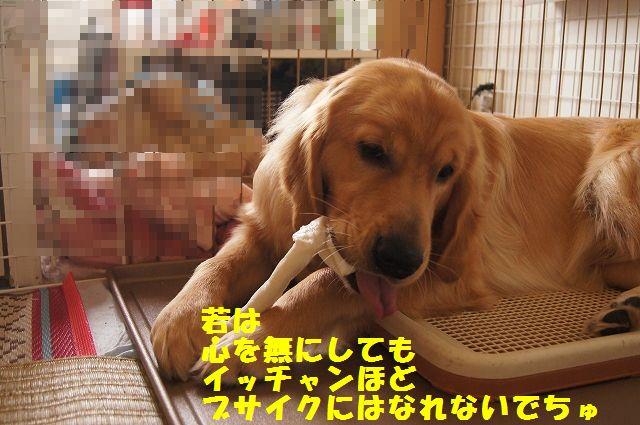 11_20120611202340.jpg