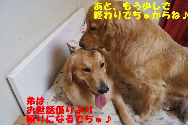 11_20121225115654.jpg