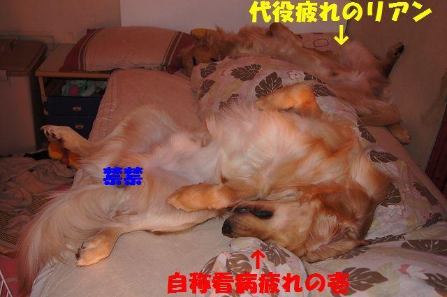 11_20130111210326.jpg
