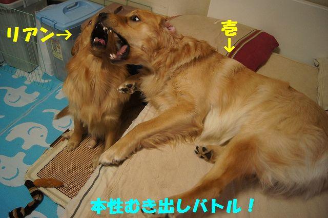 11_20130119070512.jpg