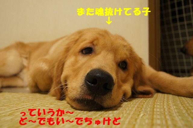 12_20120430000415.jpg