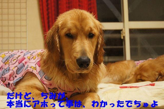12_20120504013036.jpg