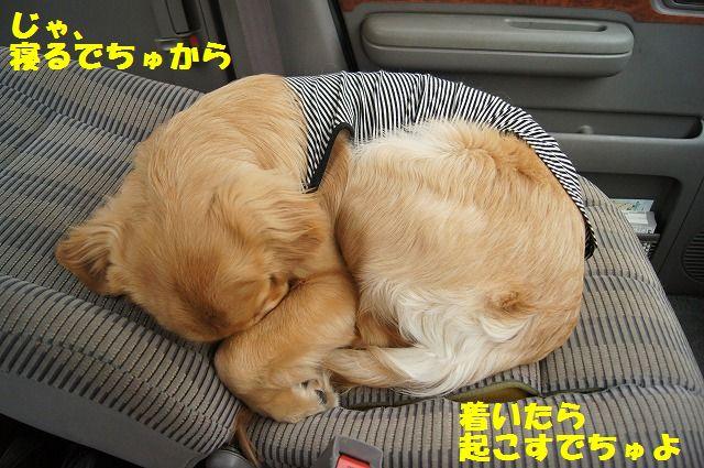 12_20120511101945.jpg