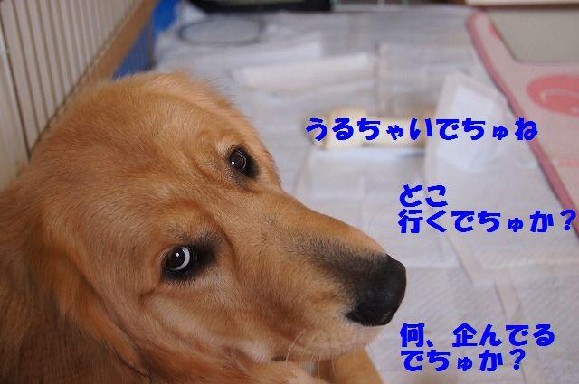 12_20120528213718.jpg