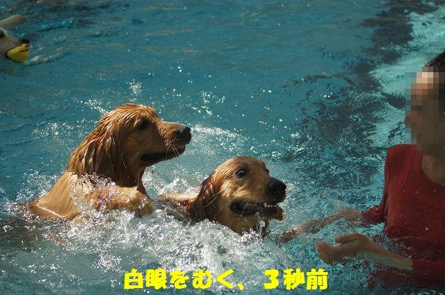 12_20121029101556.jpg