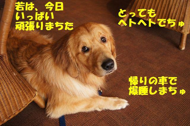 12_20121226041141.jpg