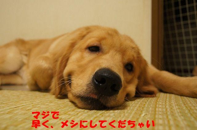 13_20120430000427.jpg