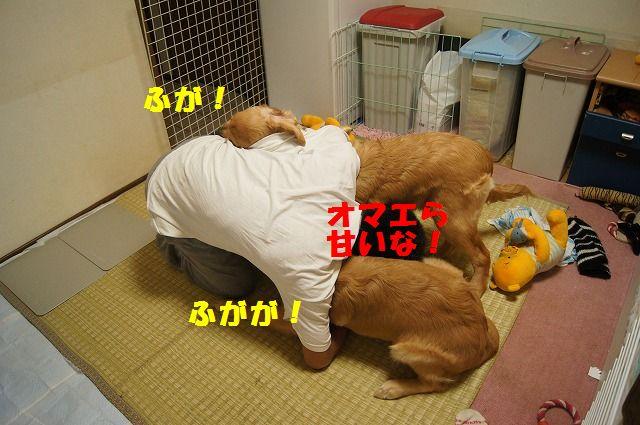 13_20120507014249.jpg