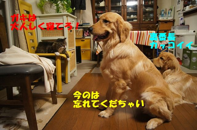 13_20120520202412.jpg