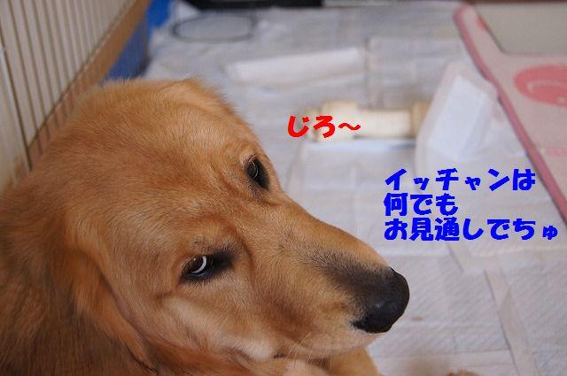 13_20120528213916.jpg