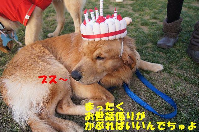 13_20121121031957.jpg