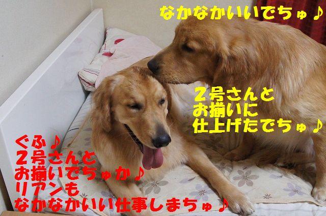 13_20121225115656.jpg
