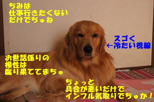13_20130116171628.jpg