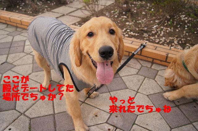 14_20120511102118.jpg