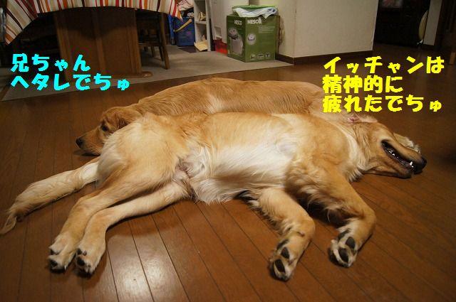 14_20120520202411.jpg