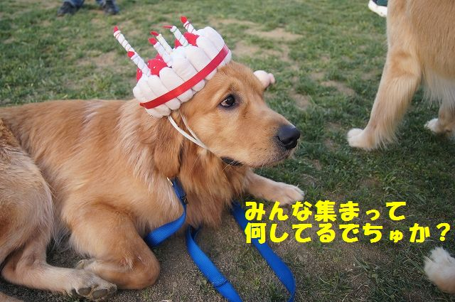 14_20121121032032.jpg