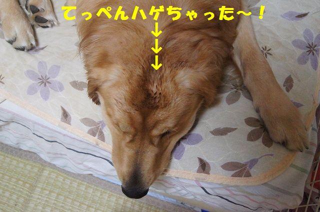 14_20121225115657.jpg