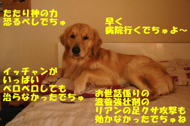 14_20130116171629.jpg