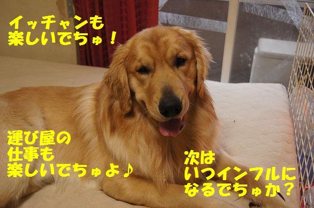 14_20130119070515.jpg