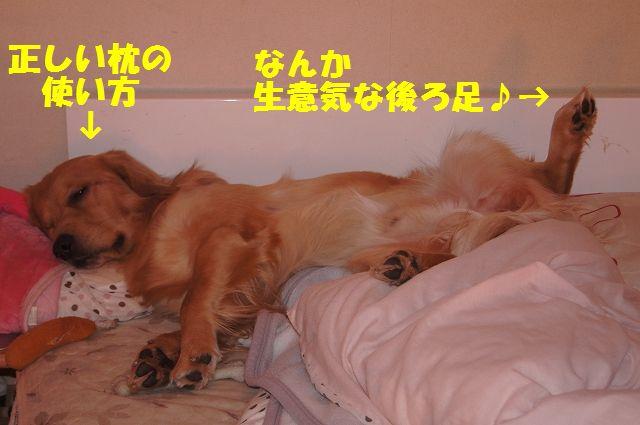 15_20121226041144.jpg