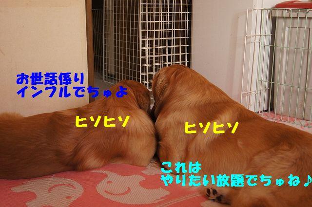 15_20130116171630.jpg