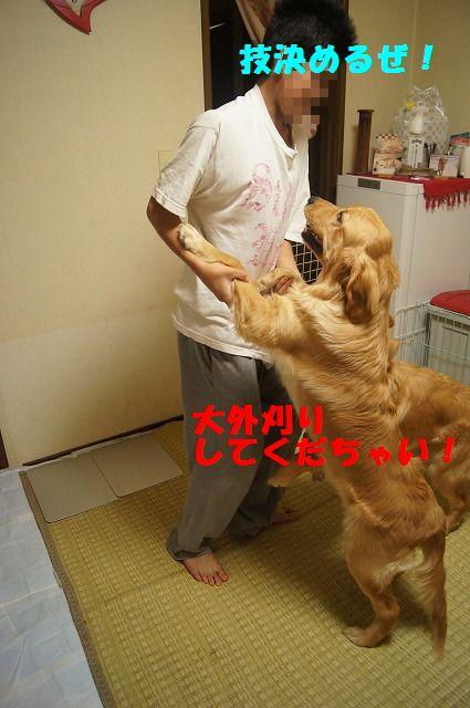 16_20120507014247.jpg