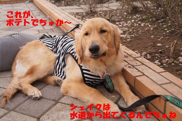 16_20120511102116.jpg