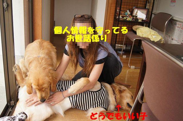 16_20120626093136.jpg