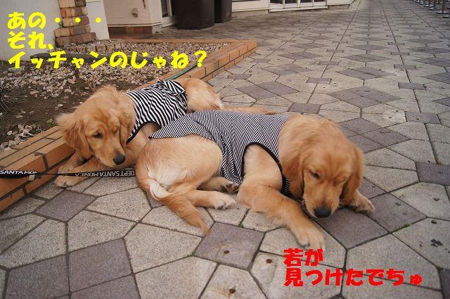 17_20120511102115.jpg
