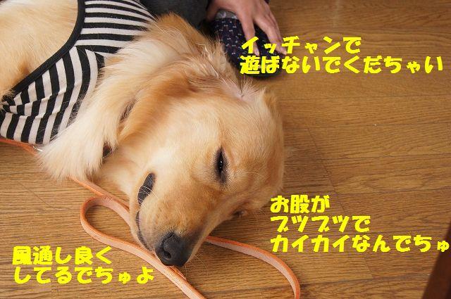 17_20120626093135.jpg