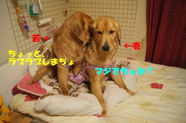 1_20120504013011.jpg