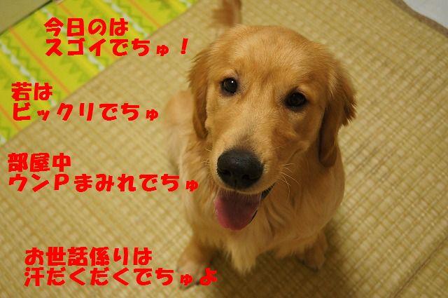 1_20120509214114.jpg