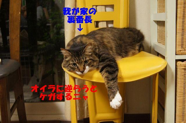 1_20120520202331.jpg