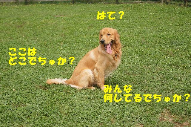 1_20121029044445.jpg